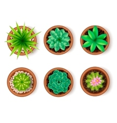 Plants Icon Set vector image