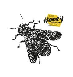 Stock of honey bee vector image vector image