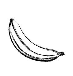 banana fruit sweet vitamins food skecth vector image