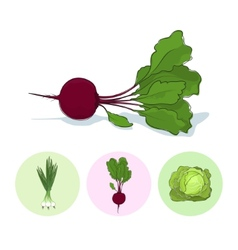 Icons green onionbeetcabbage vector