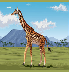 Colorful scene african landscape with giraffe vector