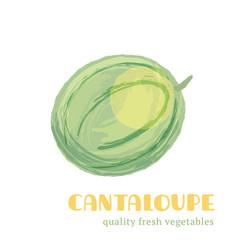 fresh cantaloupe isolated on white background vector image vector image