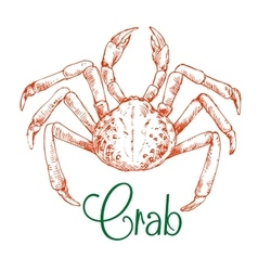 Sketch of large japanese snow crab vector image vector image