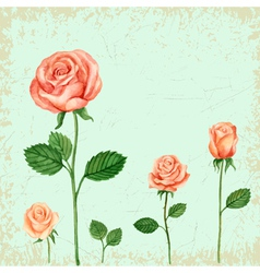 Rose watercolor for greeting cards invitations vector