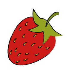 drawing strawberry sweet vitamin nature vector image vector image