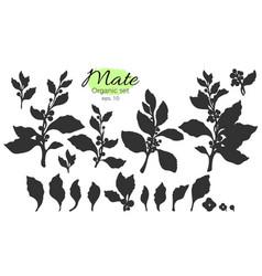 set branch leaf silhouette vector image vector image