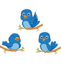 Blue bird cartoon vector