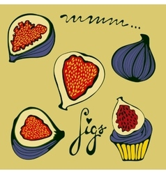 Hand drawn figs set eco food vector