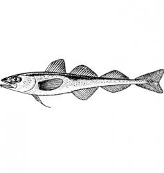 fish boreogadus saida vector image