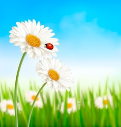 Nature spring daisy flower with ladybug vector
