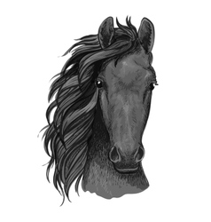 Grey horse sketch with arabian stallion head vector