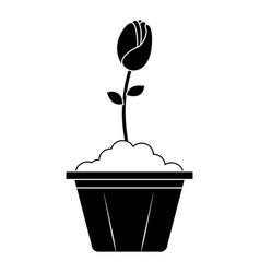 beautiful rose in pot vector image