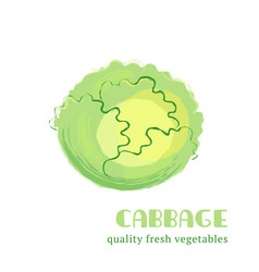 Fresh cabbage isolated on white background vector