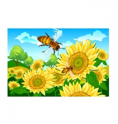 bee and sunflower vector image