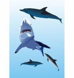 dolphins and a shark vector image