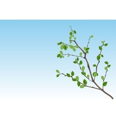 Summer season nature branch with green leaves vector
