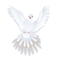 White pigeon vector