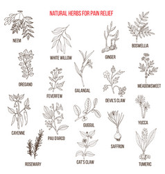 best natural herbs for pain relief vector image vector image