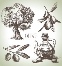Hand drawn olive set vector image