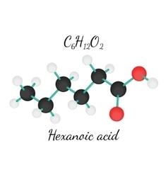 C6H12O2 Hexanoic acid molecule vector image vector image