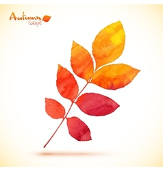 Orange watercolor painted rowan leaf vector