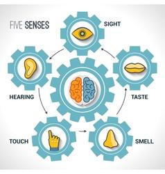 Five senses concept vector