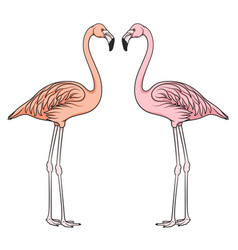 color image of flamingo vector image vector image