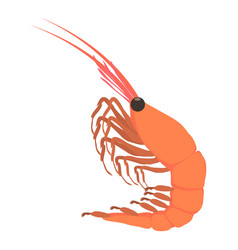 shrimp icon cartoon style vector image