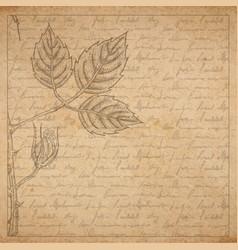 vintage old paper texture with frame and engraved vector image vector image