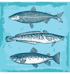 Fishes vector