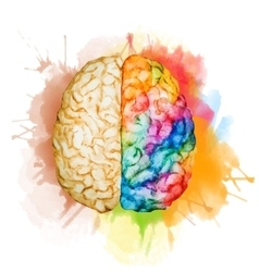 Watercolor brain vector