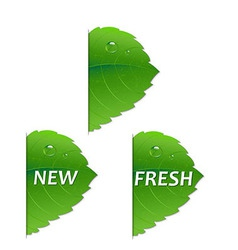 Green Leaf Set vector image vector image
