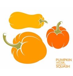 Squash Pumpkin vector image