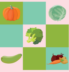 Vegetables pumpkin cabbage broccoli zucchini vector