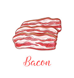 Bacon strip isolated sketch with pork meat slice vector