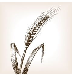 Wheat ear sketch style vector