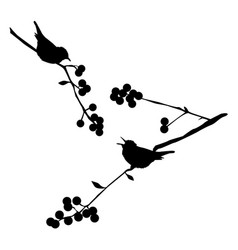 Birds on the branch vector