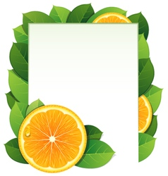 Orange slices and leaves vector