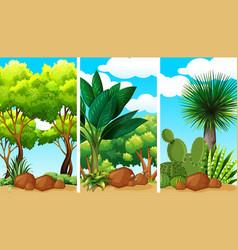 Garden scenes with plants and rocks vector