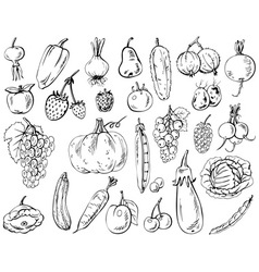 vegetables fruits and berries vector image vector image