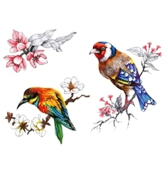 Bright birds on branches with flowers ink hand vector
