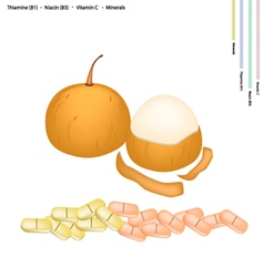 Santol fruit with vitamin c b1 and b3 vector