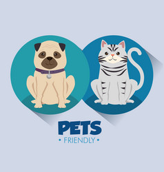 Dogs and cats pets friendly vector