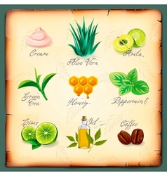 Set of natural cosmetics ingredients vector