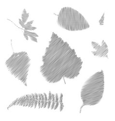Striped various leaves vector