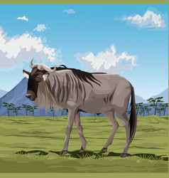 Colorful scene african landscape with wildebeest vector