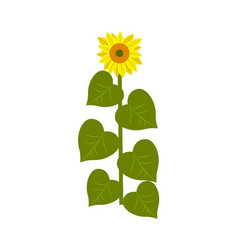 Sunflower stalk isolated icon vector