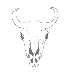 Skull of a bison vector