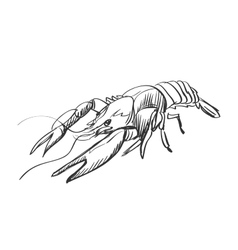 doodle lobster vector image vector image