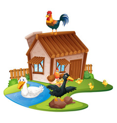 ducks and chickens on the farm vector image